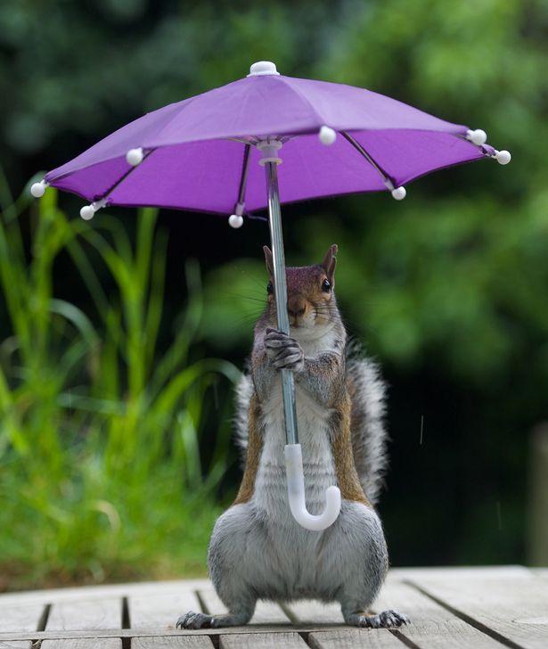PAY-squirrel-under-an-unbrella